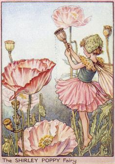 Shirley Poppy by Cicely Mary Barker. My favorite illustrator when I was a little girl