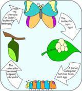 several  caterpillar crafts