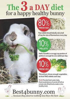 Posters and useful forms - Best 4 Bunny- The 3 a day diet for a happy healthy bunny! Bella has lots of excessive hay: meadow hay, Timothy hay Readi grass; a leaf of kale, a bowl of herbs and a few handfuls of grass and a couple homemade treats Mini Lop Bunnies, Pet Bunny Rabbits, Meat Rabbits, Dwarf Bunnies, Raising Rabbits, Cute Bunny, Food For Rabbits, Caring For Rabbits, Mini Lop Rabbit