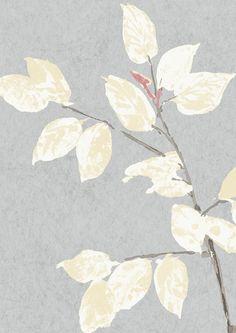 Beech Wallpaper in Cirrus Hallway Wallpaper, Feature Wallpaper, Bedroom Wallpaper, Tree Wallpaper, Wallpaper Panels, Wallpaper Samples, Pattern Wallpaper, Age Spots On Face, Dining Room Walls