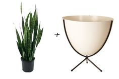 House Plant Cheat Sheet: 10 Great Vessel & Plant Pairings