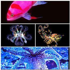 Sea creatures collage 12