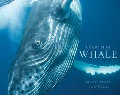 Beautiful Whale by Bryant Austin, http://www.amazon.com/dp/1419703846/ref=cm_sw_r_pi_dp_DUz3qb09CMXVN