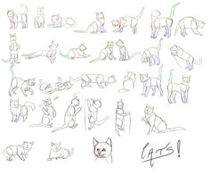 Image result for how to draw a cat in different poses