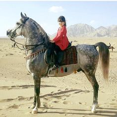 Little girl ridding arian horse Pretty Horses, Horse Love, Beautiful Horses, Royal Animals, Animals And Pets, Cute Animals, Rare Horse Breeds, Horse Girl Photography, Horse Costumes