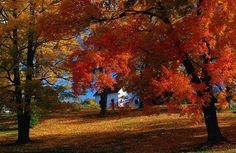 A Fall foliage tour of New England