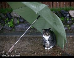 -umbrella-in-the-rain