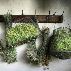 Herb Farm, Herb Garden, Herb Shop, Dry Plants, Edible Plants, Green Rooms, Flower Quotes, Pink Lily, Drying Herbs