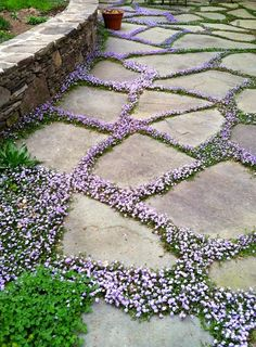 Angela'sBackyardDreams: flowering ground cover, gardening, landscaping, flowers