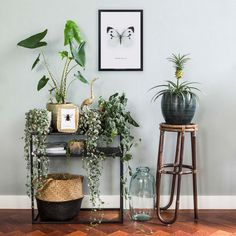 House Tour: A Cozy, Bohemian Home Shared by 3 Roommates Jungle Room, Art Of Living, Living Rooms, Cafe Design, Hanging Planters, Cozy House, Fun House, Decoration, Interior Inspiration