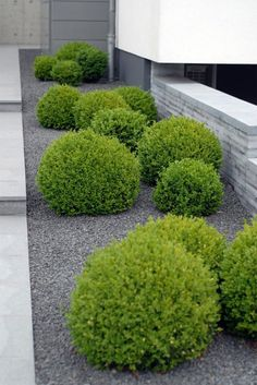 Formal & Tailored Gardens | Boxwood spheres 'randomly' placed in minimal grey gravel