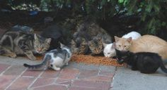Feral Cats Ireland