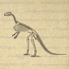 Dinosaur Bones Digital Image Download Printable Graphic