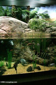Picture: Southeast Asian biotope aquarium.