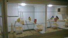 DIY Bird cage LED daylight simulation system