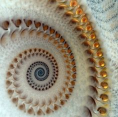Fibonacci theory.......example found in nature, but I don't know what it is...yet!
