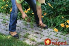 Stop buying weed killers or weeding by hand! How to get a weed-free brick driveway (or patio) that stays that way. A DIY weed prevention method that lasts - and is non-toxic. Brick Driveway, Brick Paving, Concrete Bricks, Paving Stones, Planting Succulents, Planting Flowers, Polymeric Sand, Killing Weeds, How To Install Pavers