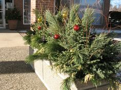 A holiday planter at a commercial property in Richfield designed by Barrett Lawn Care. #winterdecor #winterplanter