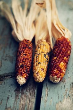 Indian Corn is wonderful to gather with brown twine and hang on the front door or gate