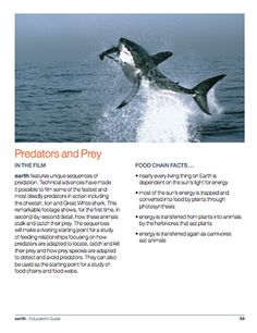 This section of the Educator's Guide for the Disney Nature film EARTH focuses on predators and prey. Includes good background information and lesson ideas.