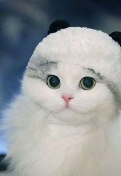 Such a Beautiful Face! Little Fur ball!! LOVE Cats  SLVH ♥