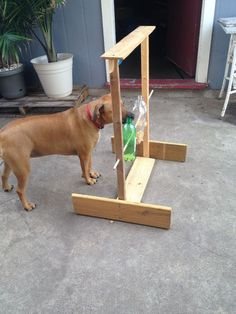 This Spin Out Game will fascinate animals of all types! It keeps their naturally curious nature busy trying to get the treats. It gives dogs something to do to occupy their minds and time and creates fascination in the animal world if placed in a location where wildlife lives. This game was fun to make and has been even more fun to see how animals have reacted to it in nature. A few times I have placed pecans in their shells, corn, etc...on top of The Spin Out Game. Birds generally get those…