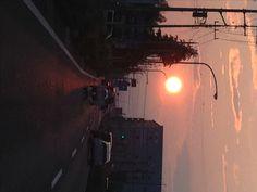 夕日を拾う:魚の庭 <2012-06-22>