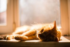 900 Ideas De Gatos En 2021 Gatos Mascotas Gatitos Lindos