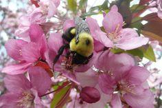 Bees n Trees
