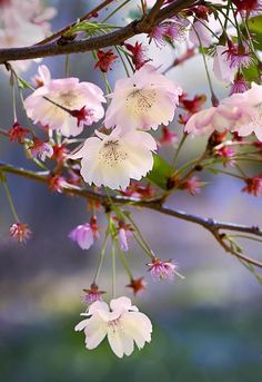 Einfach wunderschön diese Blüte