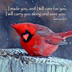 I will be your God throughout your lifetime - until your hair is white with age. I made you, and I will care for you. I will carry you along and save you. - Isaiah 46:4