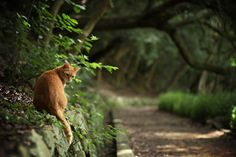 .orange kitty.