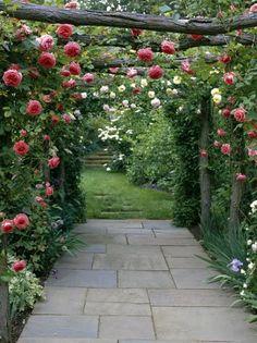 Climbing Rose Over Garden Arbor