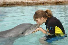 Swim with dolphins.
