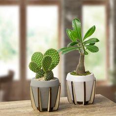 Succulent Pots, Cacti And Succulents, Planting Succulents, Succulent Care, Indoor Cactus, Indoor Plants, Ceramic Planters, Planter Pots, Concrete Planters