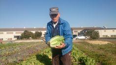 グリーンエコスターの冬野菜⑥