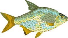 рыба клипарт вектор - Поиск в Google
