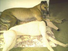 Life size greyhound crochet pattern.