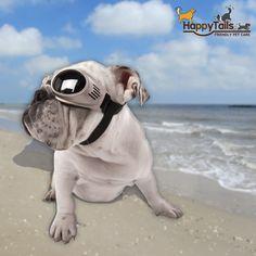 Doggles Originalz Dog Goggles For Your Beach Bunny