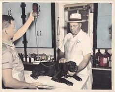 Historic hospitals Veterinarians share stories of three practices