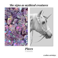 Astrological signs as creatures. Pisces And Sagittarius, Astrology And Horoscopes, Pisces Facts, Zodiac Horoscope, Astrology Signs, Pisces Lover, Pisces Fish, Zodiac Memes, Zodiac Art