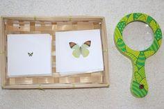 Initiation à la loupe [activité Montessori