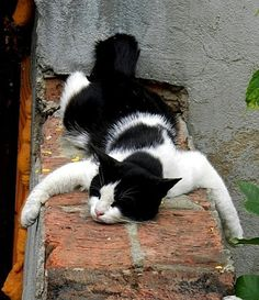 Don't mind me, I'm just sleeping my brick wall pillow.