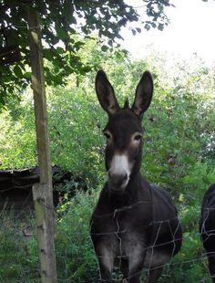 Donkey :)