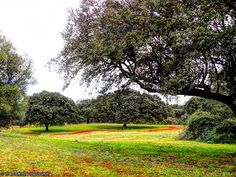 Cores da Primavera Alentejana Montemor o Novo Portugal by Vítor Laranjeiro on 500px