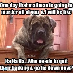 This is what Mowgli thinks every time we yell at him for barking!