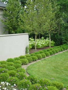 mass-of-boxwood planted repeatedly.