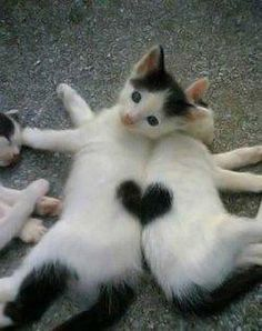 hey two black and white cats make A heart it is sooooooooooooo cuuute