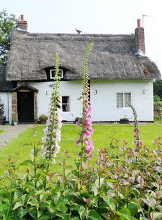 "vwcampervan-aldridge: "" Thatched cottage and Foxgloves, Long Birch, Staffordshire, England All Original Photography by http://vwcampervan-aldridge.tumblr.com """