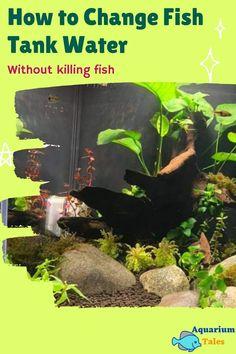 Biotope Aquarium, Betta Aquarium, Aquarium Setup, Aquarium Design, Tropical Freshwater Fish, Freshwater Aquarium, Tropical Fish, Betta Fish Tank Mates, Dead Fish